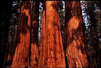 Gallery: Sequoia and Kings Canyon