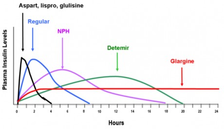 Graph of insulin action times